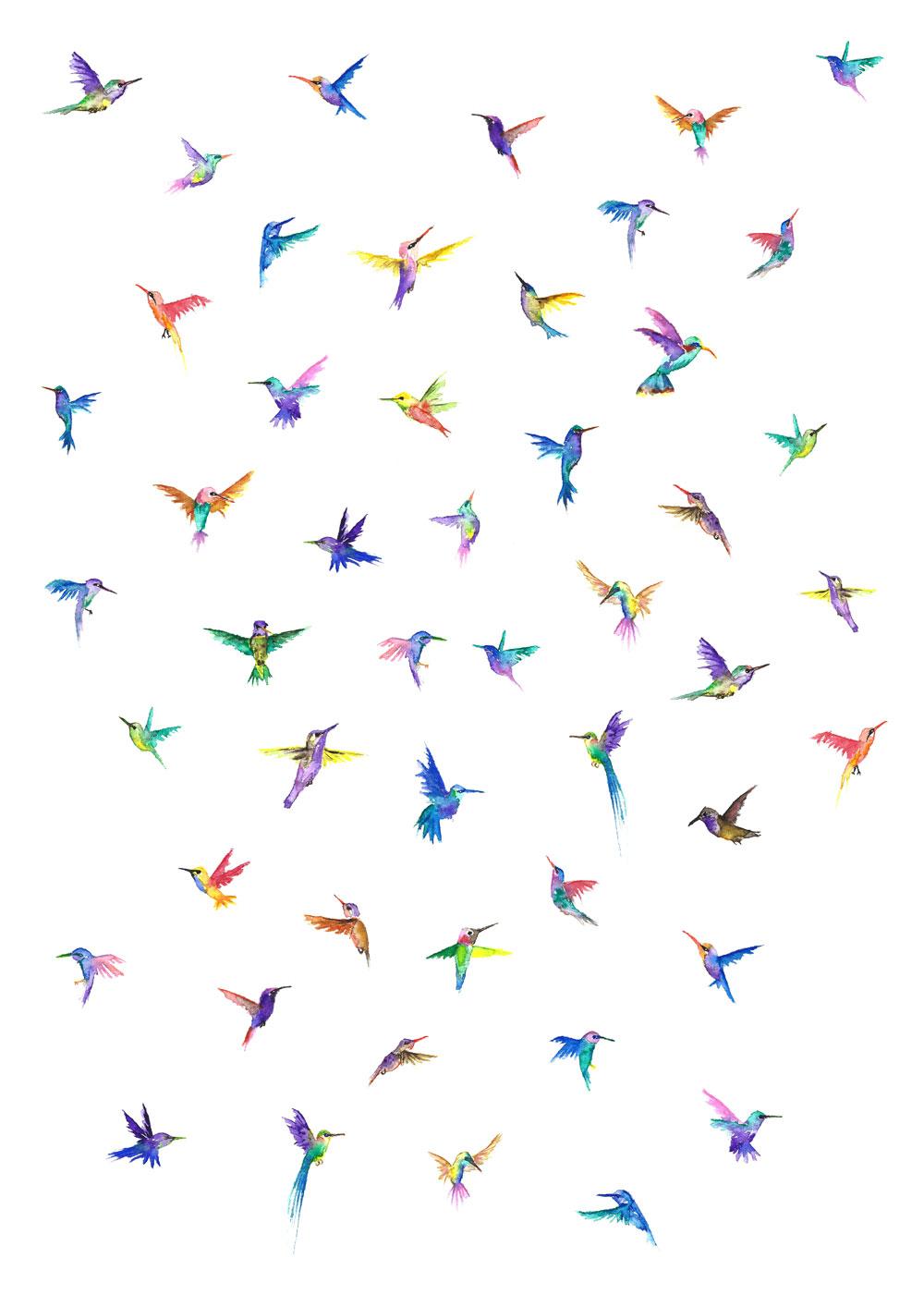 Hummingbirds part 1